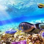 tropicalfishegypt
